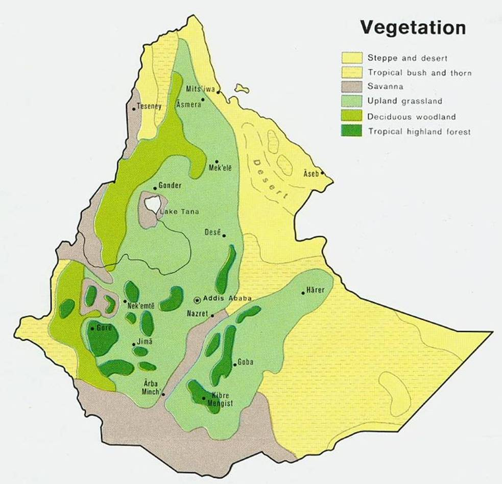 ETHIOPIA vegetation